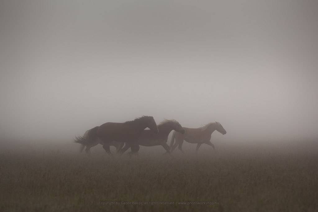 The Black Horses goes toward the north country
