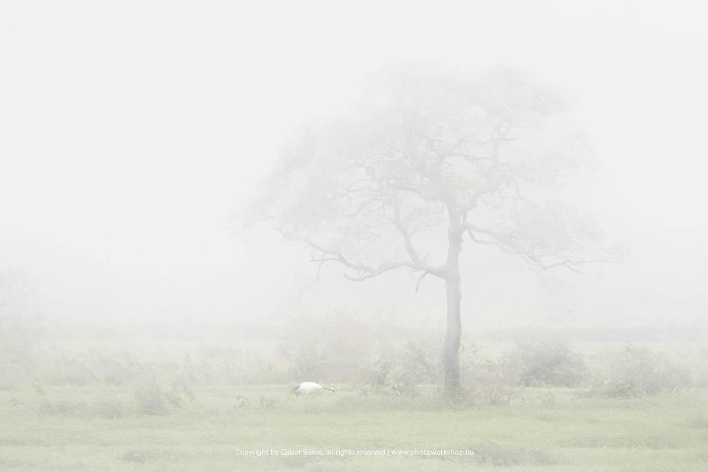 Kiri - 霧